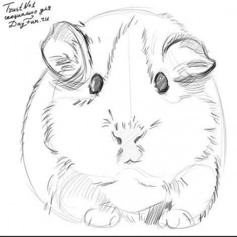 how to draw guinea pig step by step 4