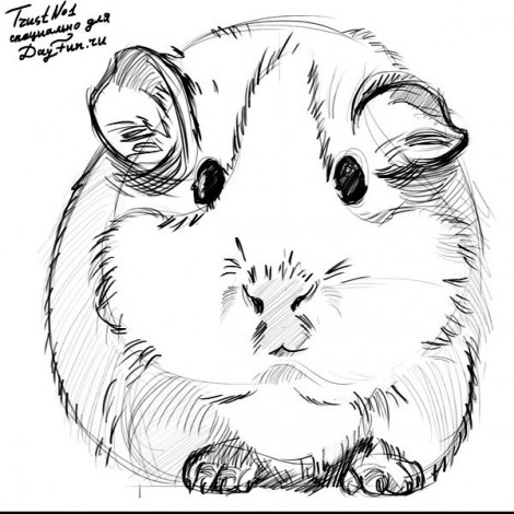 how to draw guinea pig step by step 5