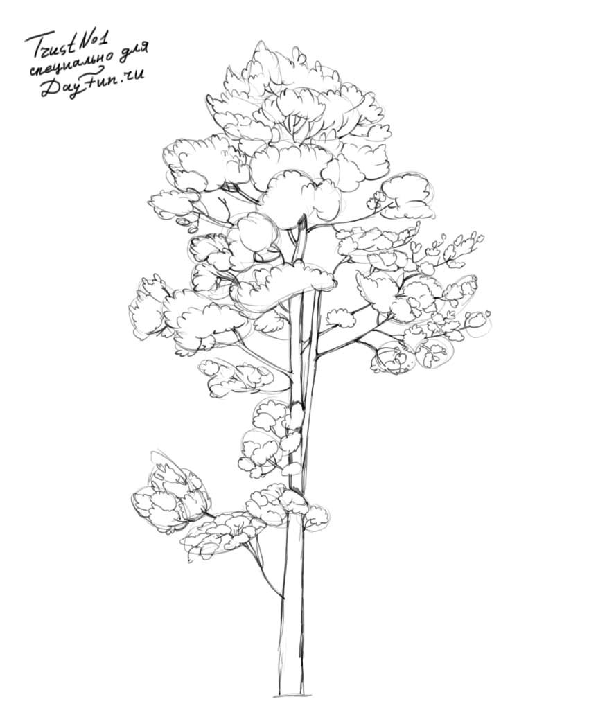 How To Draw Realistic Pine Trees Step By Step