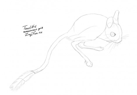 how to draw a jerboa step by step 3