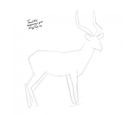 how to draw antelope step by step 1