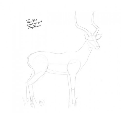 how to draw antelope step by step 2