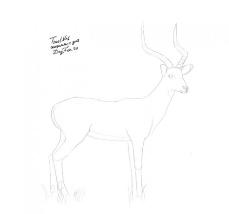 how to draw antelope step by step 3