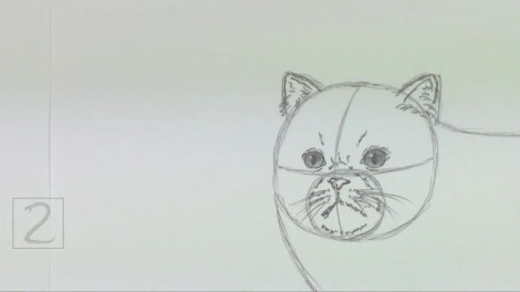 How to Draw a Cat (Persian) 3