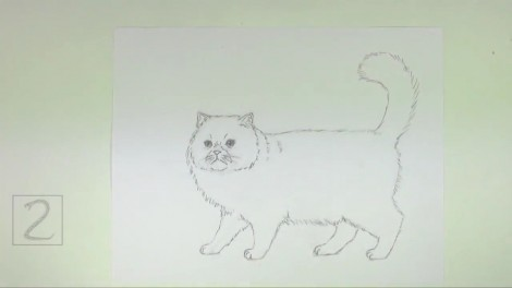 How to Draw a Cat (Persian) 5