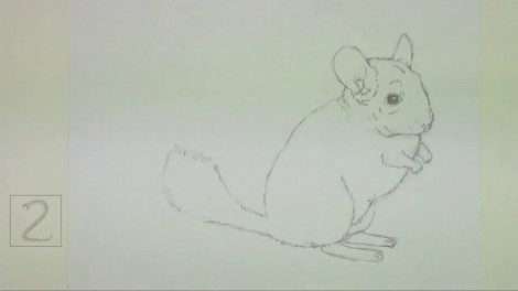 How to Draw a Chinchilla.mp4_20151006_212628.649