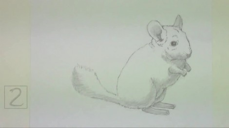 How to Draw a Chinchilla.mp4_20151006_212633.539